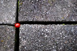 Tomato by maya h Jan 09